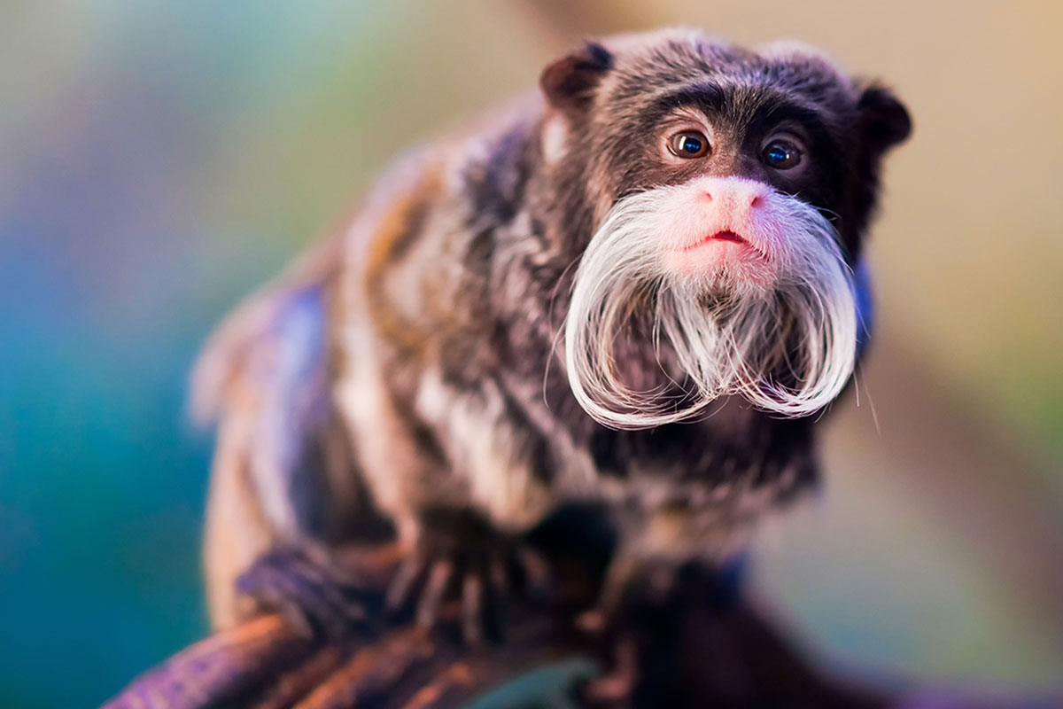 Beardy Monkey: Take Beard Inspiration From The Amazing Styles Of Other