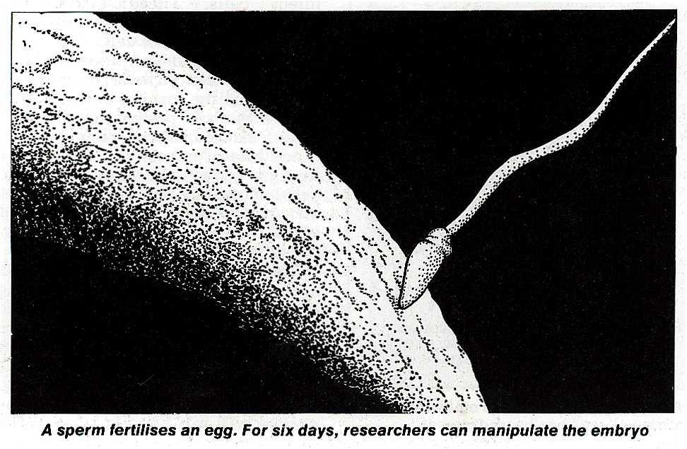 A sperm fertilising an egg