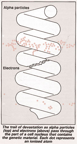 Alpha particles and electrons