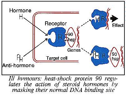 Heat-shock protein 90
