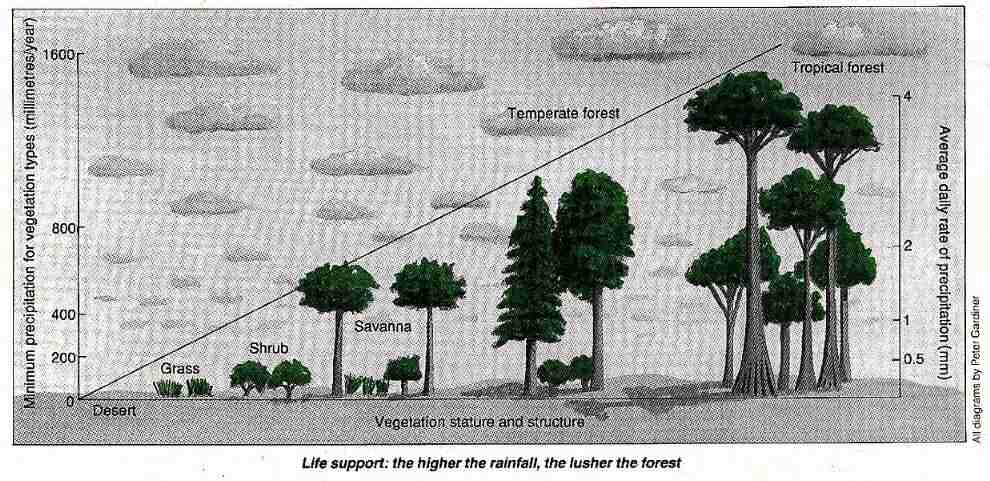 Rainfall and forest height