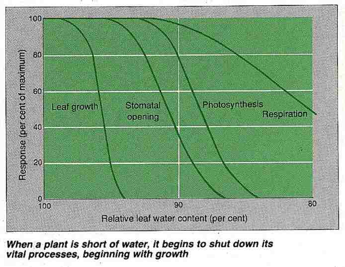 Water content and plant responses