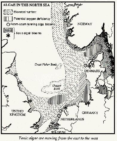 Toxic algae in the North Sea 1989