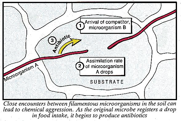 Chemical aggression in the soil