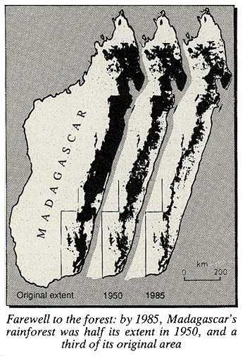 Madaguscar rainforest 1950-1985