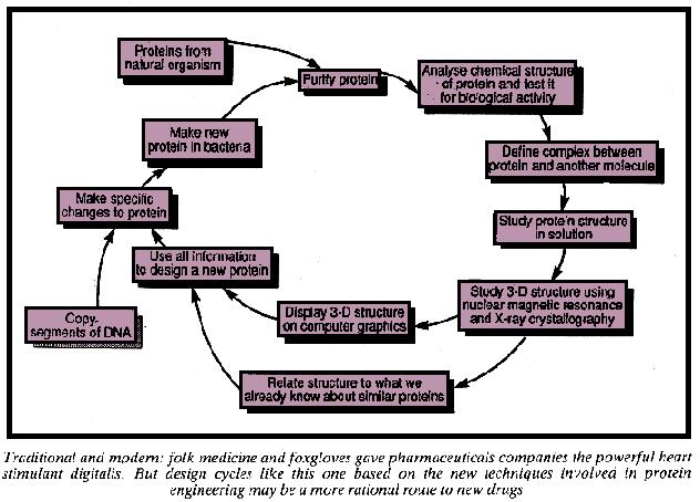 Design cycle for pharmaceuticals