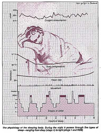 The physiology of the sleeping body