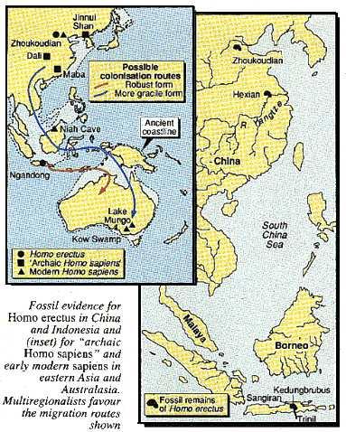 Fossil evidence for Homo erectus