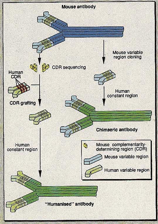Third-generation antibody technology
