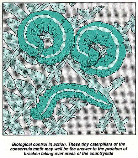 Biological control using caterpillars