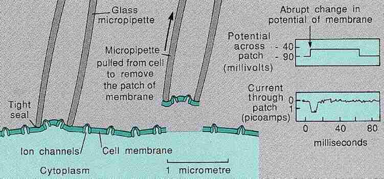 Measuring current in a cell member