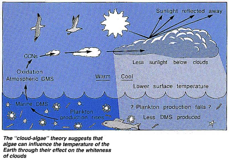 The cloud-algae temperature theory