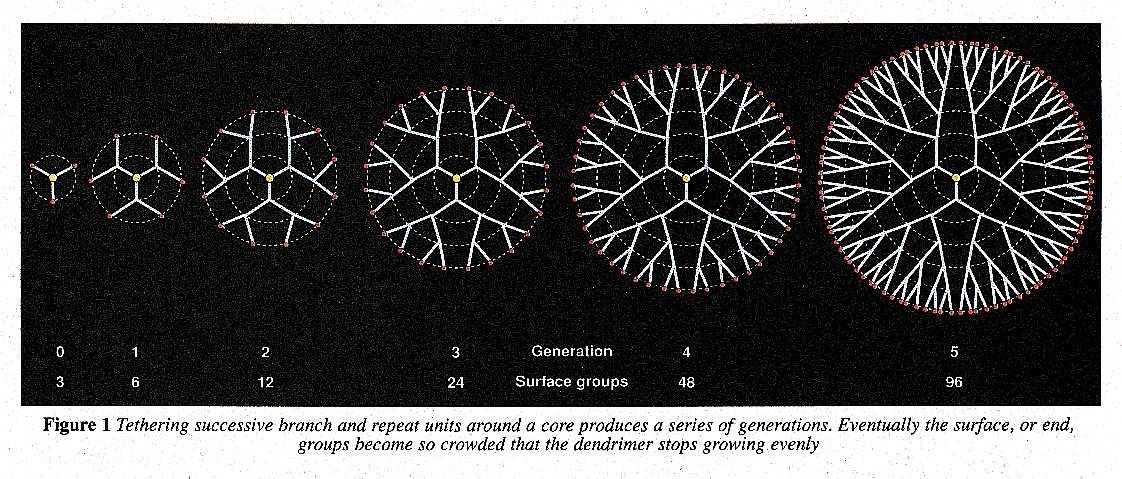 The growth of a dendrimer molecule