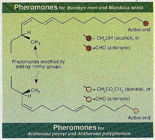 Structures of Pheromones
