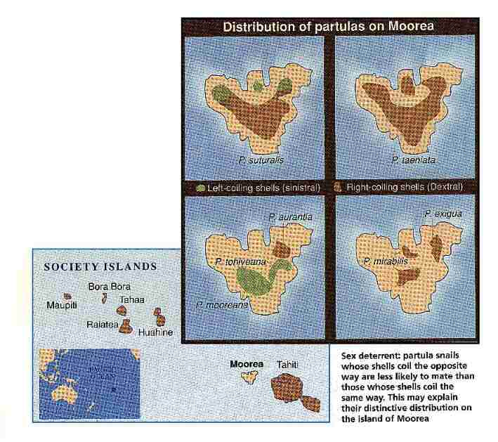 Distribution of partulas on Moorea