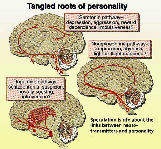 The tangled roots of personality