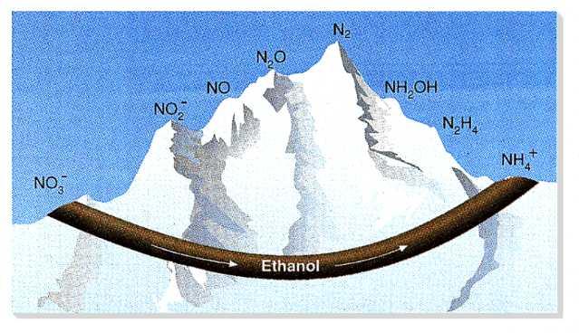 Transforming nitrate into ammonium