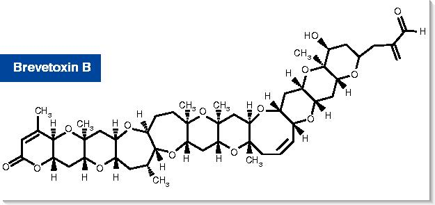 Structure of brevetoxin B
