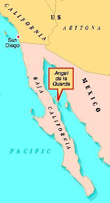 Location of spiders in Baja California