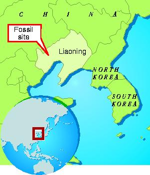 Location of Chinese bird fossil/finds