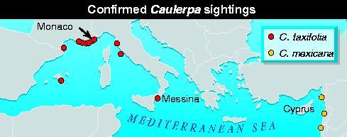Confirmed Caulerpa taxifolia sightings