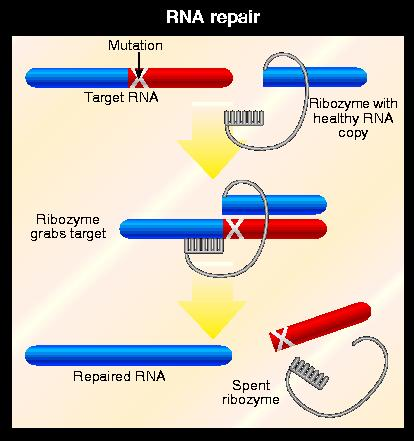 Editing enzyme to correct faulty genes