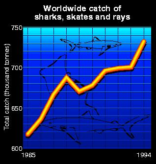 Worldwide catch of sharks, skates and rays