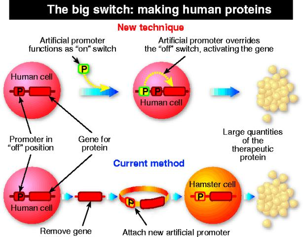 How to produce anaemia protein in culture of human cells