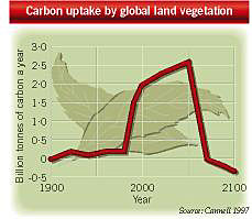 Carbon uptake by global land vegetation