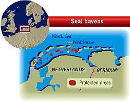 Seal havens off the Netherlands coast