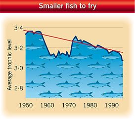 The effects of overfishing on larger predatory species