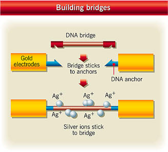 Building electrical circuits using DNA strands