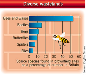 Scarce species found in brownfield sites in Britain