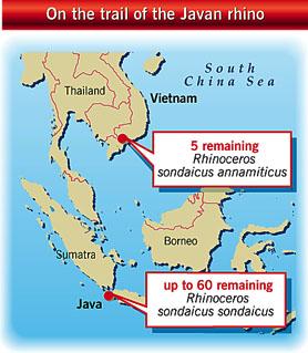 Javan rhinos territories