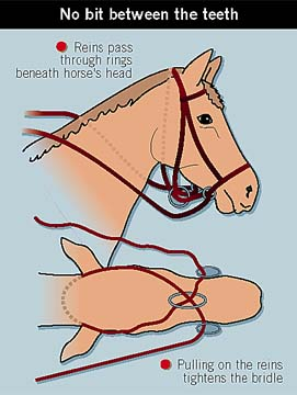 A horses bridle without a bit