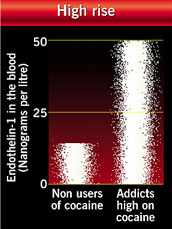 Amounts of endothelin in the blood of cocaine users and non-users