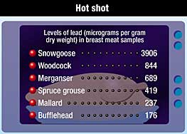 Levels of lead in game bird meat