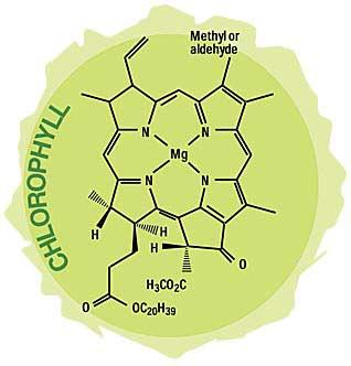 Last word:- chlorophyll molecule