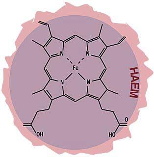 Last word:- haem molecule