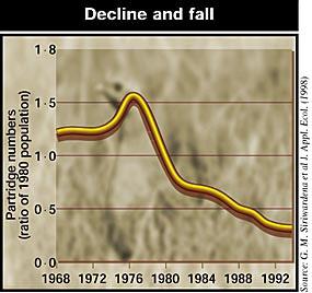 Decline in Britain's partridge population