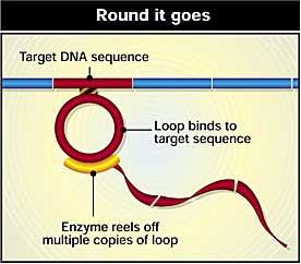 Replicating DNA using a molecular hula-hoop