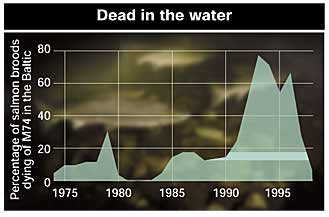 Percentage of Baltic salmon broods dying