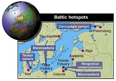 Water flea hotspots in the Baltic Sea