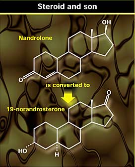 Drug testing athletesfor 19-norandrosterone