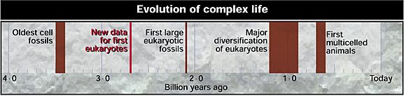 Evolution of eukaryotic cells