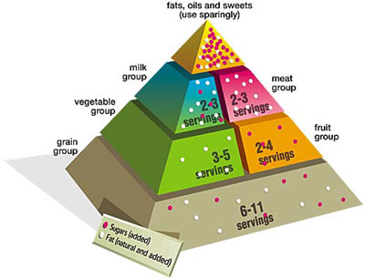 Food pyramid: nutritional guide