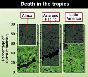 The reduction in tropical rainforests