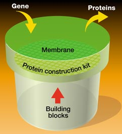 Making protein from genes without cells