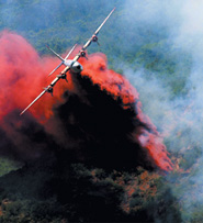 LOSING BATTLE: planes can't carry enough water to put out the fire quickly (Photo: Katz/FSP)