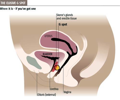 The elusive G spot: where it is - if you've got one